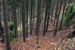 České Švýcarsko - cesta na Malou Pravčickou bránu