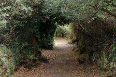 Typická pěšina v Bretani