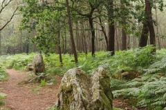 Menhiry v lese