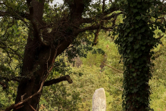 Menhir Kerderff