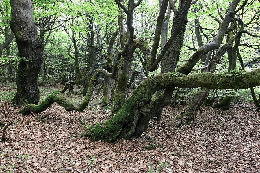 Dvorský les  – Forest