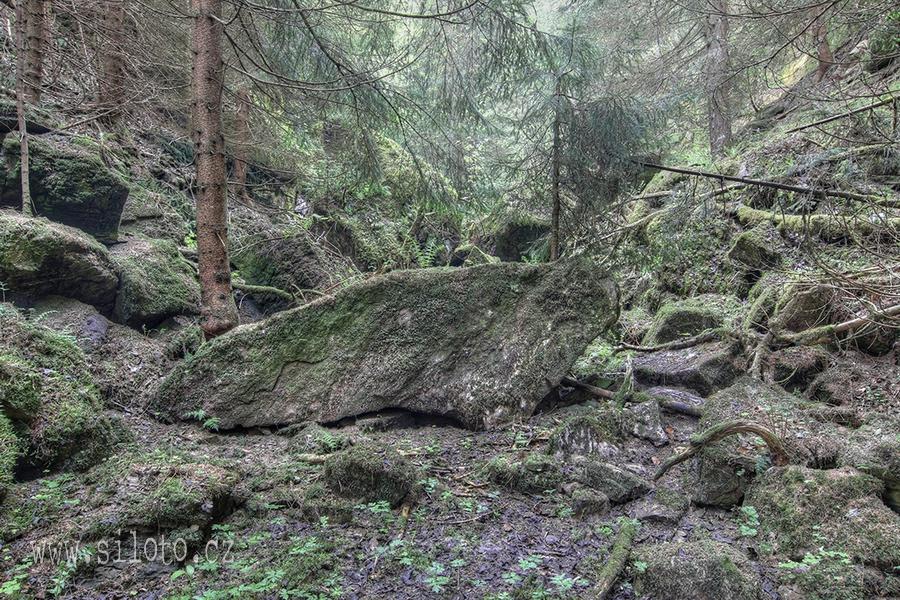Zarostlý opuštěný lom – Overgrown abandoned quarry