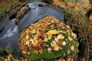 Jevanský potok na podzim