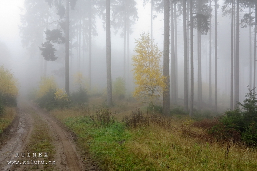Podzim ve Slavskovském lese