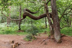 Brocéliandský les