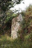 Menhir zarostlý v křoví
